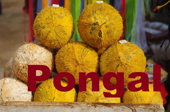 Pongal South Indian Festival