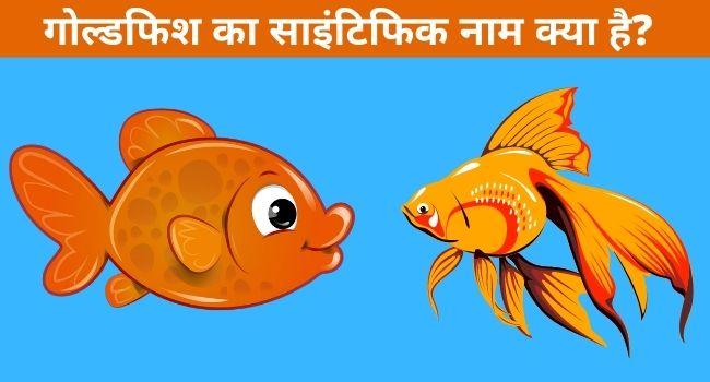 goldfish ka scientific naam